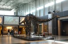 Apatosaurus at Tellus